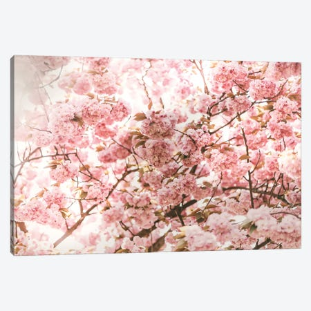 Pink Blossom Canvas Print #RAB110} by Ruby and B Canvas Art
