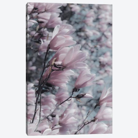 Magnolia Canvas Print #RAB162} by Ruby and B Canvas Print
