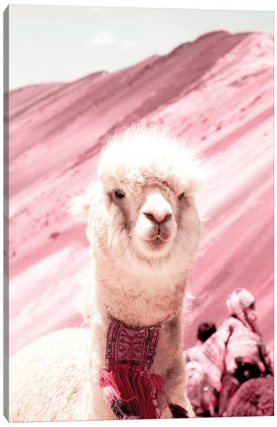Alpaca In Pink Canvas Art Print