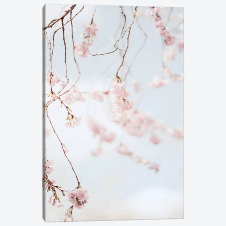 Blooms Canvas Print #RAB225} by Ruby and B Canvas Print