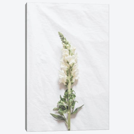 Minimalist White Flower Canvas Print #RAB280} by Ruby and B Canvas Artwork