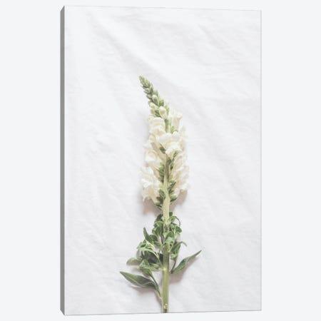 Minimalist White Flower Canvas Print #RAB280} by Ruby and B Canvas Artwork