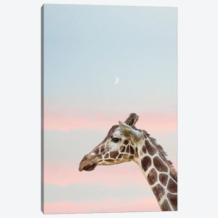Sunset Giraffe II Canvas Print #RAB72} by Ruby and B Art Print