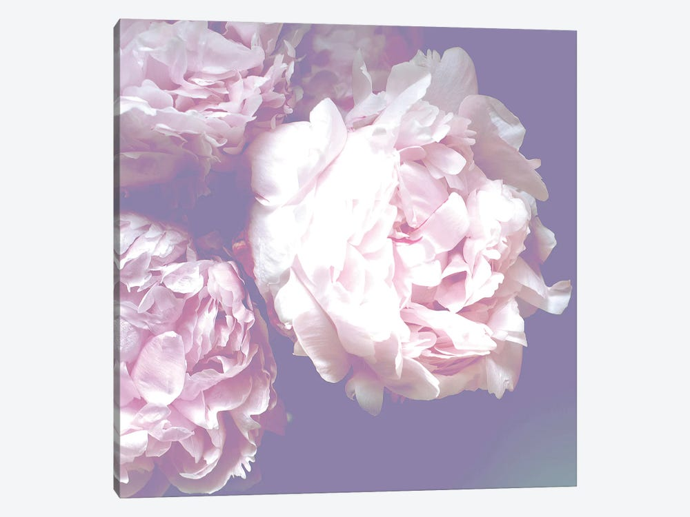 Peony by Ruby and B 1-piece Canvas Art