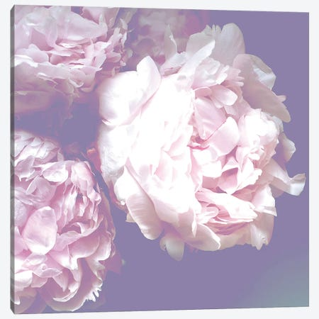 Peony Canvas Print #RAB88} by Ruby and B Canvas Artwork