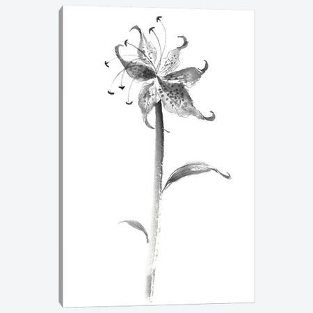 Ink Tiger Lily Canvas Print #RAE15} by Nan Rae Art Print