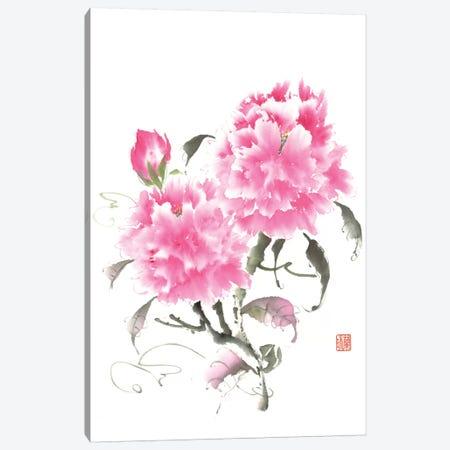 Peony Blossoms II Canvas Print #RAE2} by Nan Rae Canvas Art Print