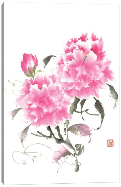 Peony Blossoms II Canvas Art Print
