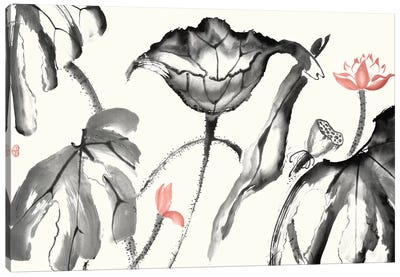 Lotus Study with Coral I Canvas Art Print