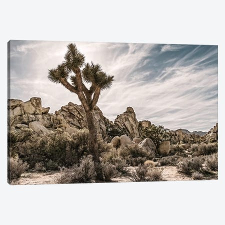 Joshua Tree Views VIII Canvas Print #RAP10} by Rachel Perry Canvas Art Print