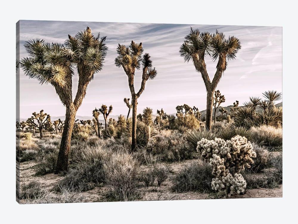 Joshua Tree Views IX by Rachel Perry 1-piece Canvas Art
