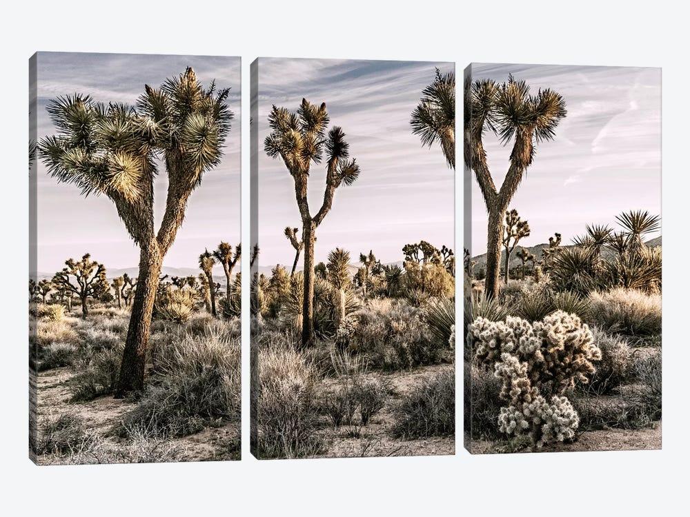 Joshua Tree Views IX by Rachel Perry 3-piece Canvas Art