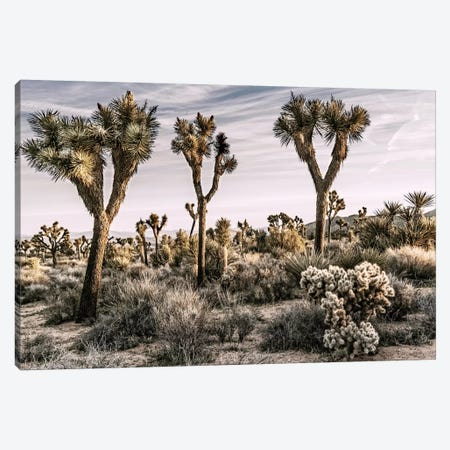 Joshua Tree Views IX Canvas Print #RAP11} by Rachel Perry Canvas Art Print