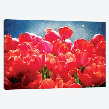 Fuchsia Tulips I Canvas Print #RAP1} by Rachel Perry Canvas Art Print