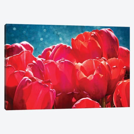 Fuchsia Tulips II Canvas Print #RAP2} by Rachel Perry Art Print
