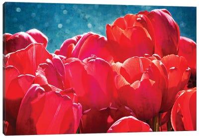 Fuchsia Tulips II Canvas Print #RAP2