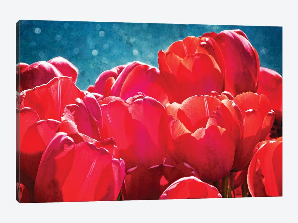 Fuchsia Tulips II by Rachel Perry 1-piece Canvas Wall Art