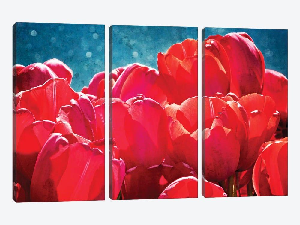 Fuchsia Tulips II by Rachel Perry 3-piece Canvas Artwork