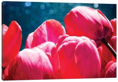 Fuchsia Tulips III Canvas Print #RAP3