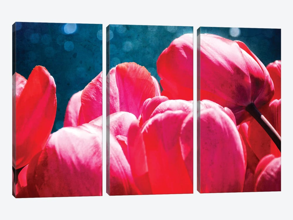 Fuchsia Tulips III by Rachel Perry 3-piece Canvas Print