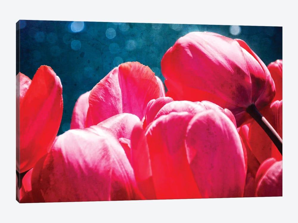 Fuchsia Tulips III by Rachel Perry 1-piece Canvas Art Print