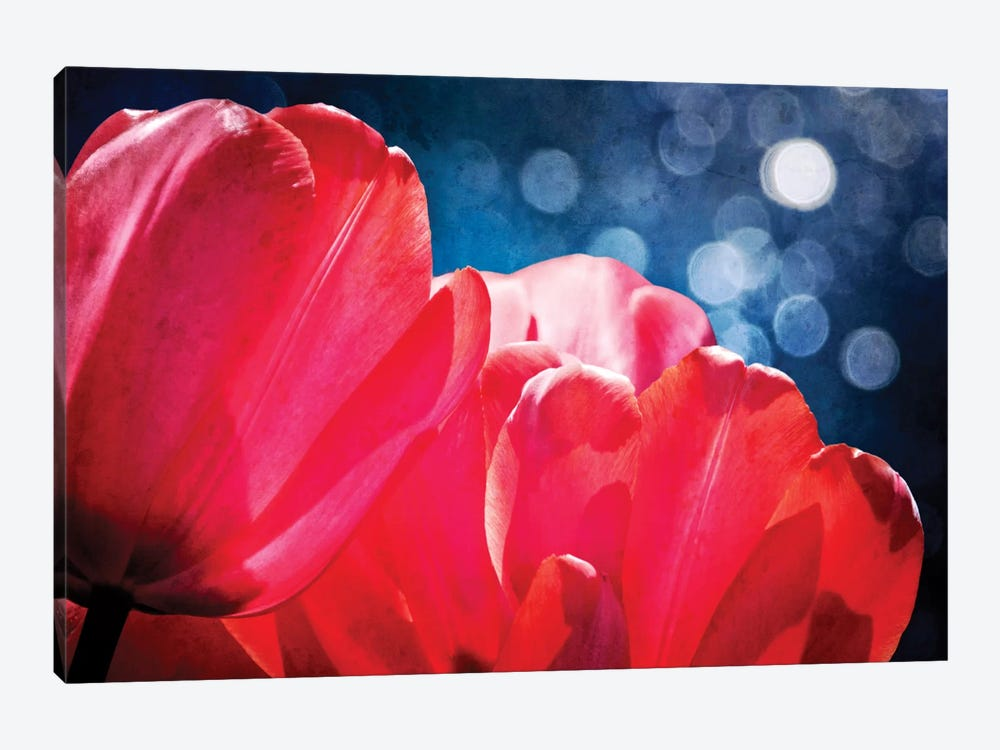 Fuchsia Tulips IV 1-piece Canvas Artwork