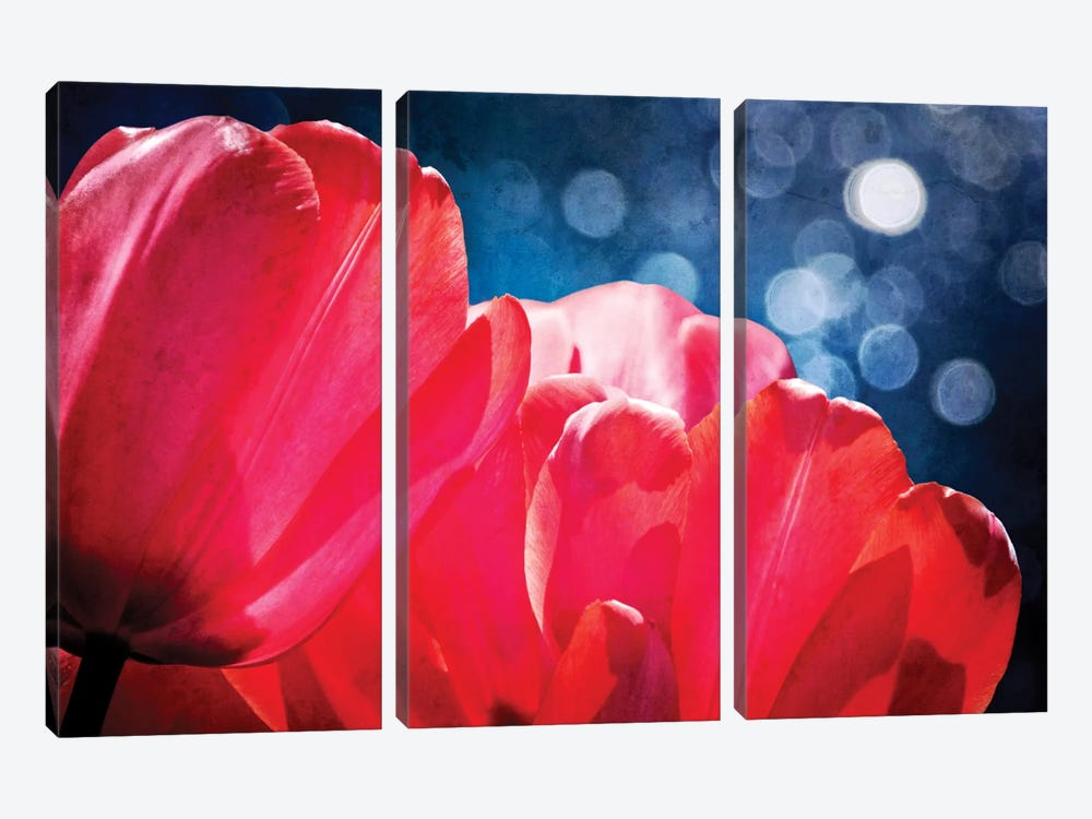 Fuchsia Tulips IV 3-piece Canvas Artwork