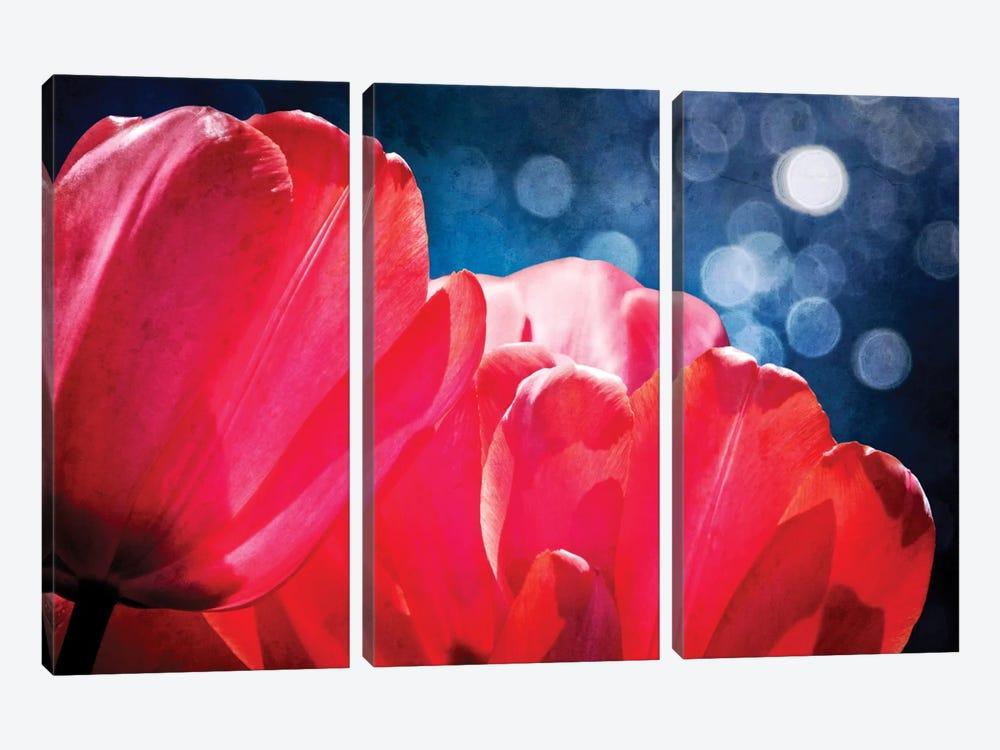 Fuchsia Tulips IV by Rachel Perry 3-piece Canvas Artwork