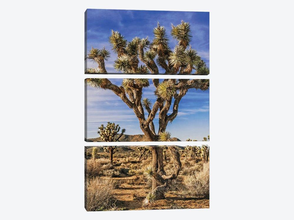 Joshua Tree Views III by Rachel Perry 3-piece Canvas Art Print