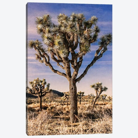 Joshua Tree Views IV Canvas Print #RAP6} by Rachel Perry Canvas Artwork
