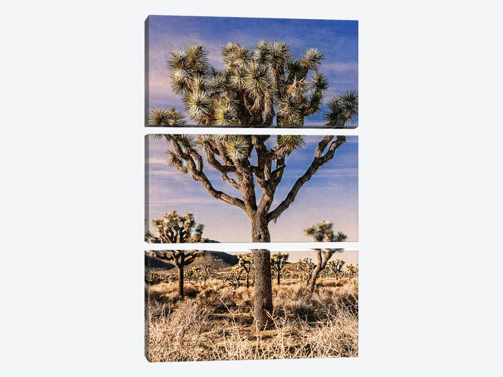 Joshua Tree Views IV by Rachel Perry 3-piece Canvas Artwork