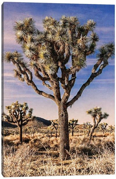 Joshua Tree Views IV Canvas Art Print