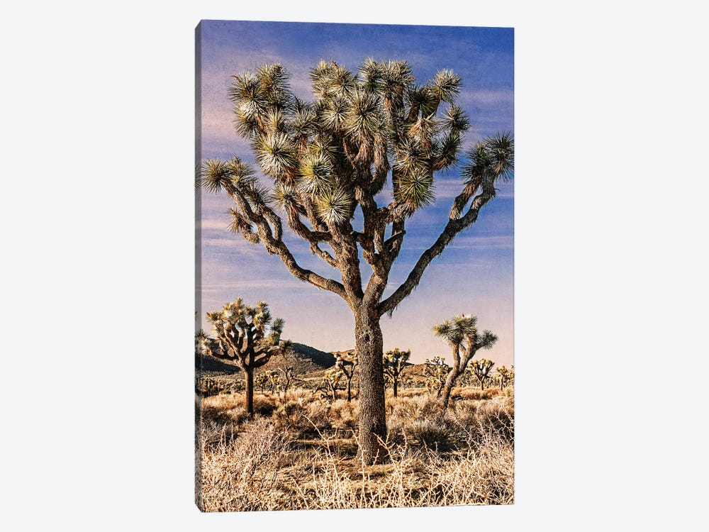 Joshua Tree Views IV by Rachel Perry 1-piece Canvas Artwork