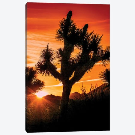 Joshua Tree Views V Canvas Print #RAP7} by Rachel Perry Canvas Artwork