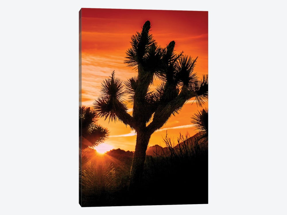 Joshua Tree Views V by Rachel Perry 1-piece Canvas Art Print