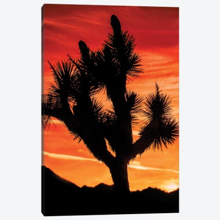 Joshua Tree Views VI Canvas Print #RAP8} by Rachel Perry Art Print