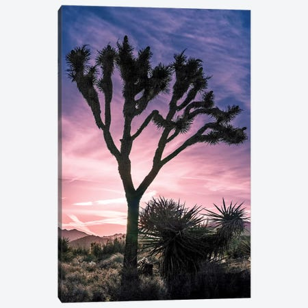 Joshua Tree Views VII Canvas Print #RAP9} by Rachel Perry Canvas Art Print