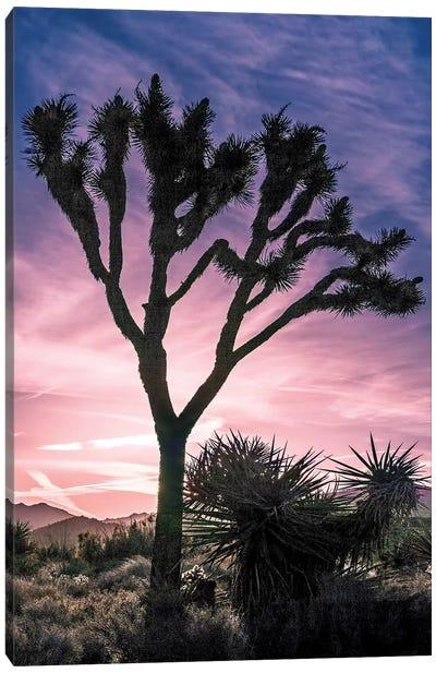 Joshua Tree Views VII Canvas Art Print