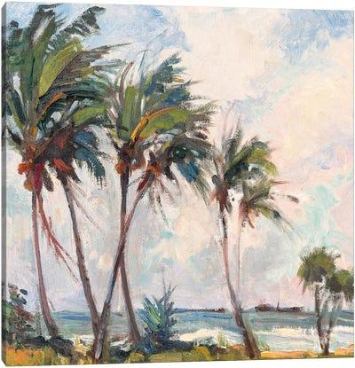 Six Palms Canvas Print #RAR3