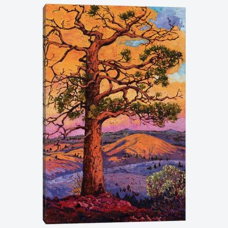 Grandfather Pine Tree Canvas Print #RBC19} by Rebecca Baldwin Canvas Artwork