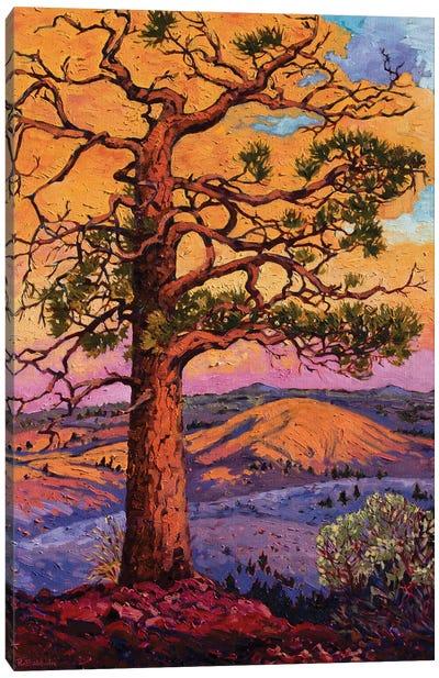 Grandfather Pine Tree Canvas Art Print