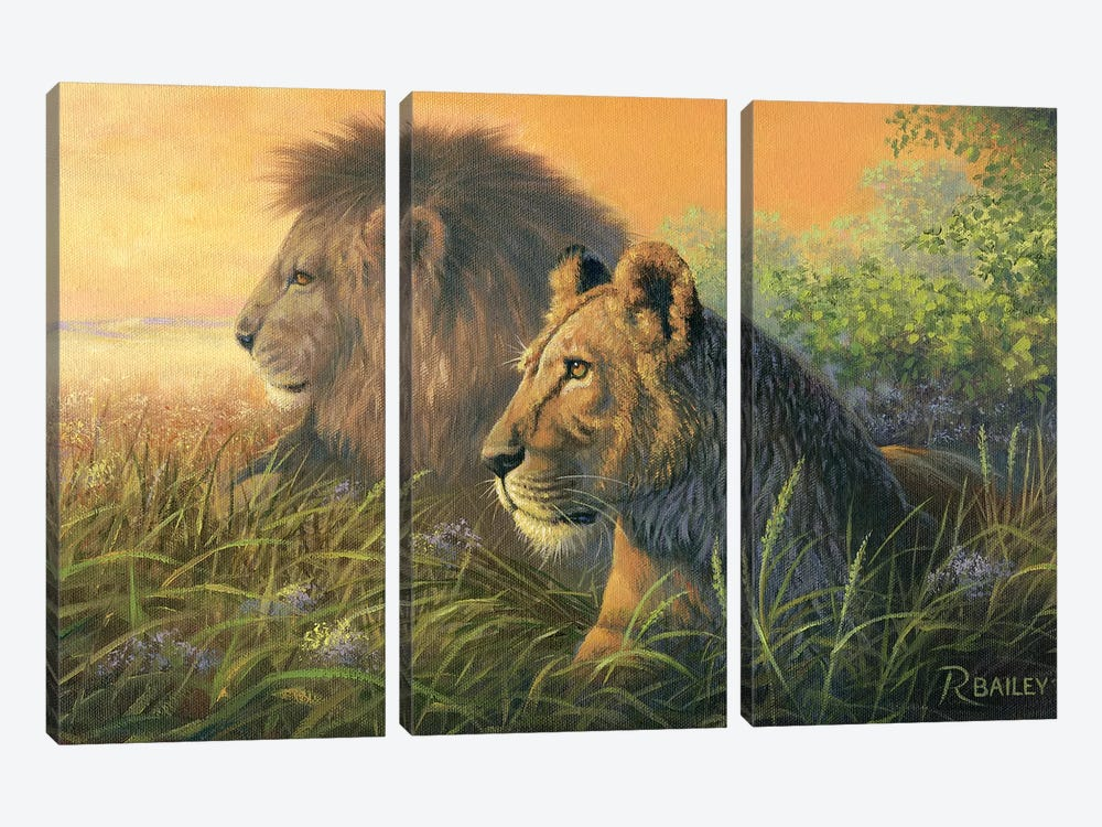 Lion Queen by Rod Bailey 3-piece Canvas Print