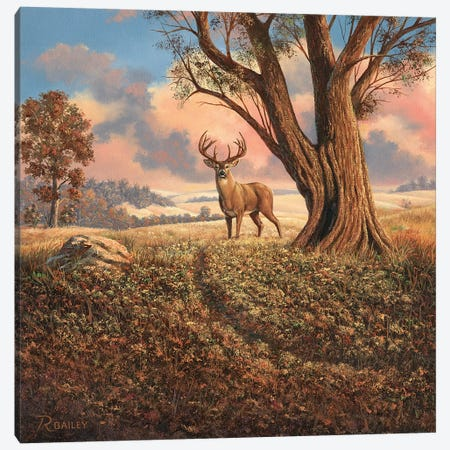 Loners Canvas Print #RBL29} by Rod Bailey Canvas Art