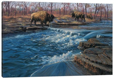 Osage Watering Hole Canvas Art Print