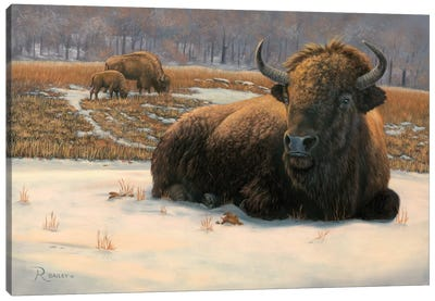 Winter Break Canvas Art Print