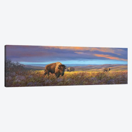 Bison Sunset Canvas Print #RBL6} by Rod Bailey Canvas Wall Art