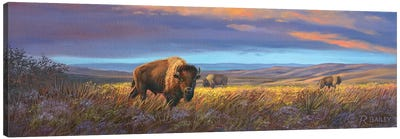 Bison Sunset Canvas Art Print