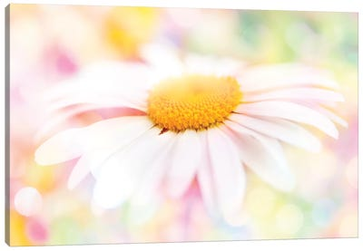 Colour Pop Daisy Canvas Art Print