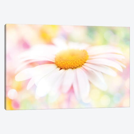 Colour Pop Daisy Canvas Print #RBM12} by Ros Berryman Canvas Artwork