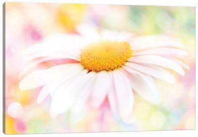 Colour Pop Daisy Canvas Art Print